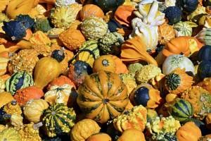 pumpkin-1651956_640