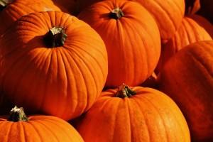 pumpkins-1659946_640